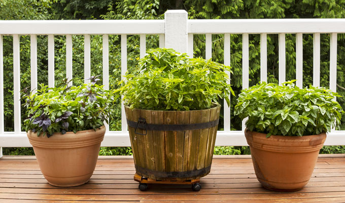 מיגון לחצר ולגינה